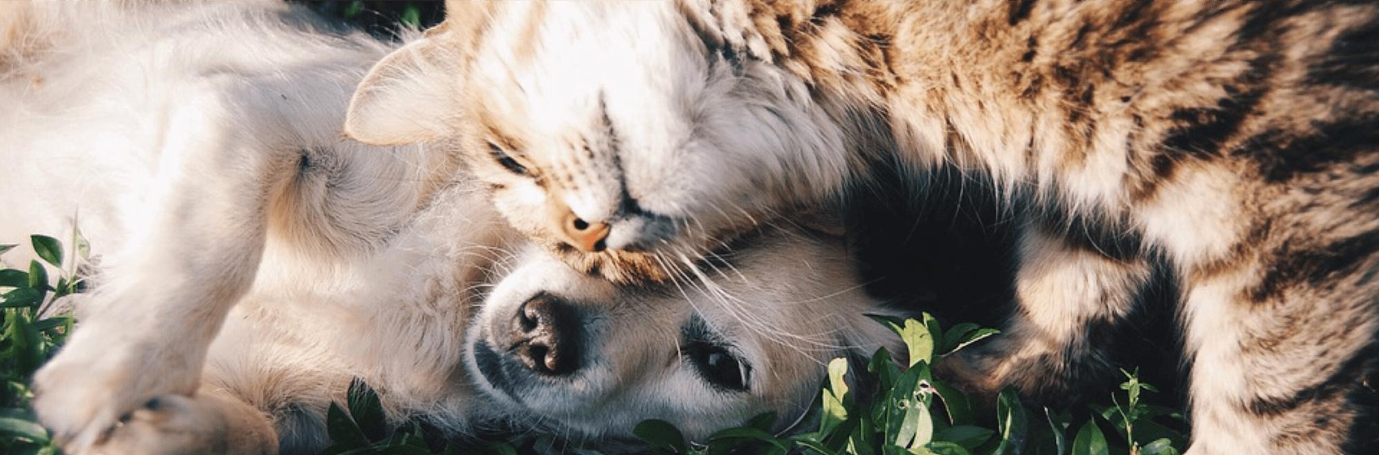L'Assicurazione per cani e gatti 1