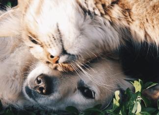 L'Assicurazione per cani e gatti